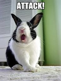 mean-rabbit